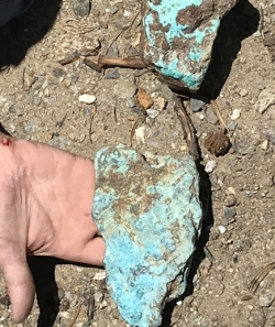 Bright blue chrysocolla from a vein of copper oxide mineralization, found at the Sedalia Mine by Wendy Carley of the CMS.